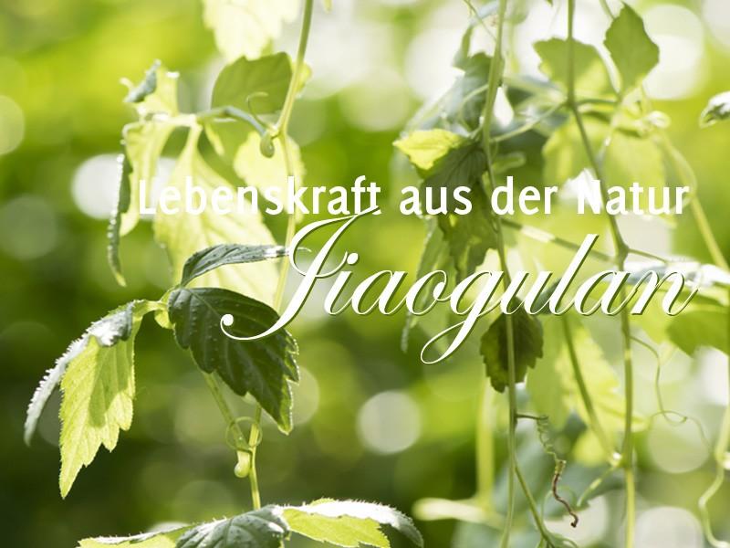 Jiaogulan, Tee und Naturprodukte